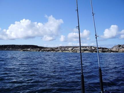 Mit den Dorschflüsterern zur Fischstäbchenernte - Angelcamp
